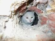 Pet cat rescued from a block wall